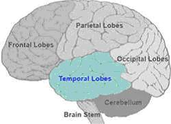 frontal temporal
