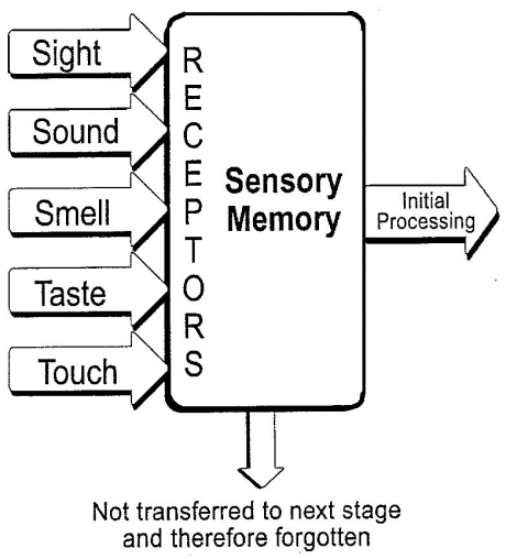 sensory-memory