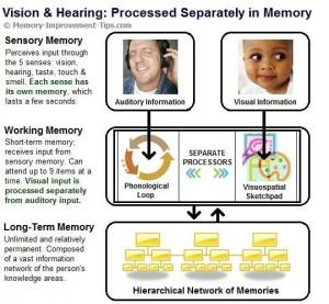 working-memory-two-processes
