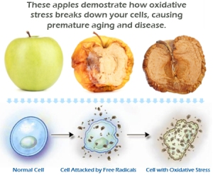 appleoxidativestress